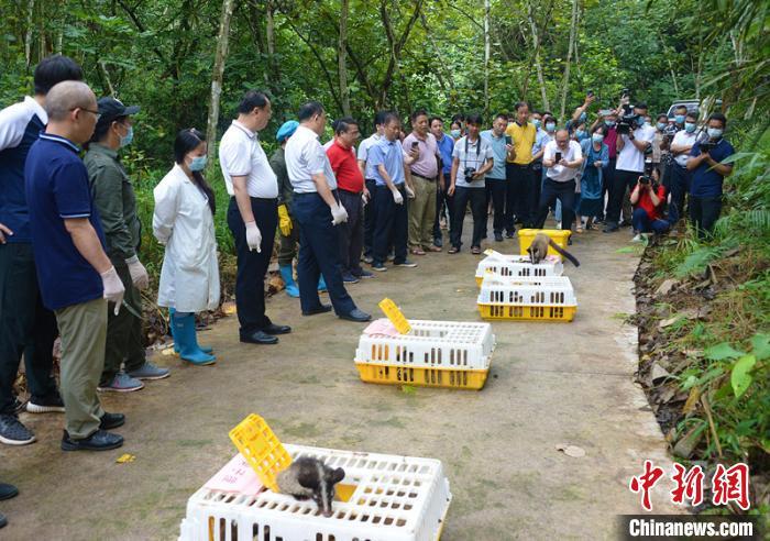 广西放归一批陆生野生动物 人工繁育产业有序转型